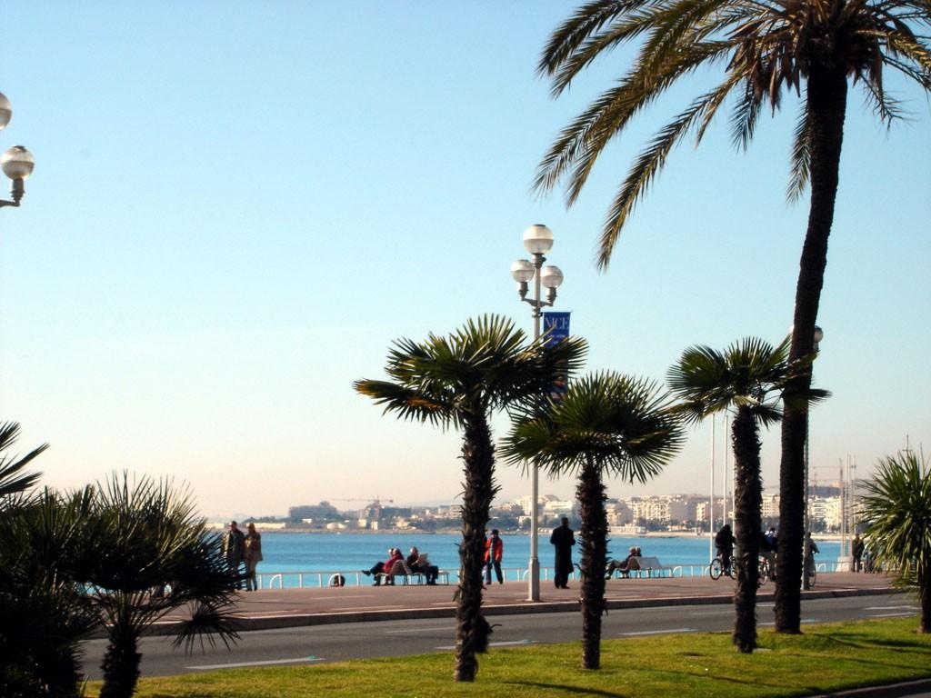 palmiers_promenade